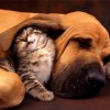 February is National Spay/Neuter Month